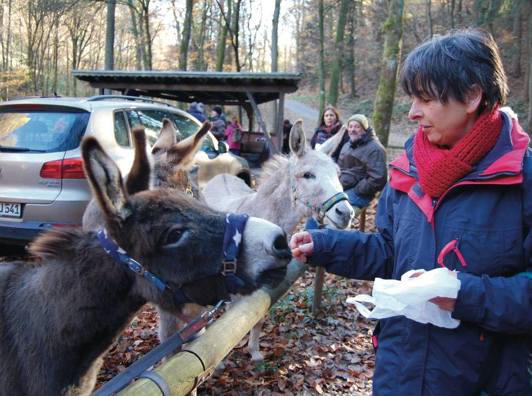 Bei der Mittagsrast gab es auch für die Esel einen Snack. Diese Teilnehmerin hatte extra Möhrchen mitgebracht – die ließ sich natürlich auch Winnie-Puuh gerne schmecken.