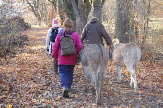 Mit den Eseln ging es durch den herbstlichen Wald. Jeder Teilnehmer, der wollte, durfte einen der vier Esel führen.