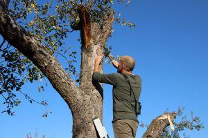 Geübt schlägt Arbeitsanleiter Daniel Scheffler mit einem Hammer den Nagel in den Baum auf der Streuobstwiese. Hier soll ein neuer Nistkasten für Fledermäuse aufgehängt werden.
