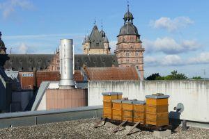 Bienenstöcke auf dem Dach des Martinushauses.