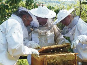 Bienenvater Andreas Roser (Mitte) begutachtet mit den Jungimkern Horst (links) und Beate Wagner (rechts) die Entwicklung des jungen Bienenvolks.