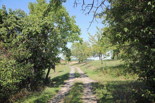 Der größte Teil des Bildstockwegs führt durch Felder und Wiesen.