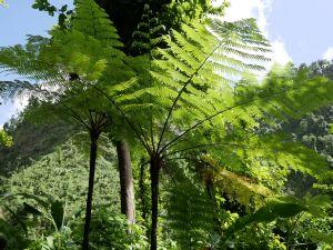 Grüne Pflanzen in dicht bewachsenem Gelände.