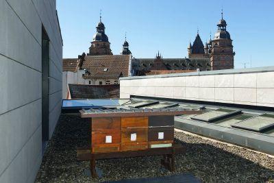 Drei Bienenstöcke wurden Ende März auf dem Dach des Martinushauses angesiedelt.