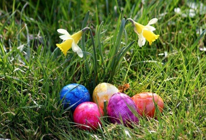 Fünf bunt gefärbte Ostereier liegen neben zwei Narzissen im Gras.