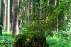 """Für ihr Abschlussprojekt """"Unter Holz - Blicke in den Wald"""" haben die Volontärinnen und Volontäre des """"ifp"""" unter anderem mit Förstern, einem Psychotherapeuten und einem Forensiker gesprochen."""