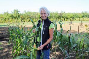"""""""Erst wenn der Mais älter wird und somit reifer, fängt er mit der Einfärbung an."""" Gartenbautechnikerin Magdalena Becker auf dem Feld mit den Maispflanzen, die für die Eröffnung der Adveniat-Weihnachtsaktion ausgesät wurden."""