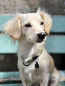 Die Hündin Sophie ist eine der drei Hunde, die das Vinzentinum besuchen.