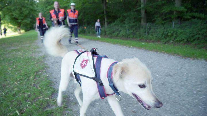 Lupo gehört zur Rettungshundestaffel der Malteser in Dachau.